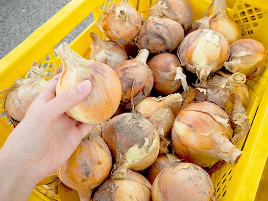 リサイクル肥料で育った野菜の販売をしました